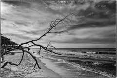 rough coast (ingrid.lowis) Tags: ahrenshoop2017 bw baltic sea cost küste strand ostsee dars monochrom