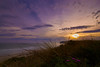 St Kilda Beach-New Zealand-20-10-17-Sage Robinson- 2 (Sage_Robinson_Photography) Tags: dunedin stkildiabeach newzealand sunset coastallandscape foregroundflowers purplesky sandyshoreline goldensun coastalsunset smoothsea