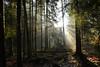 Rayons de lumière (Croc'odile67) Tags: nikon d3300 sigma contemporary 18200dcoshsmc paysage landscape fleurs forest vosgesdunord lumière arbres trees nature