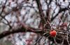 Cricket. (Canad Adry) Tags: tree arbre bokeh sony a6000 105mm nikkor fruit kaki plaquemenier orange nature artistic vintage lens