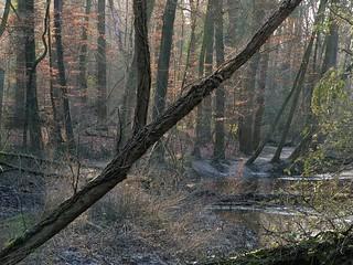 Nature area Bekendelle in Woold near Winterswijk - Achterhoek