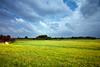 De Weerribben 1 (MartinGJ56) Tags: bloeien bloem boom gras landschap natuur plant struik wolken waterscape