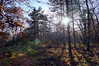 Glare (Kostya_E) Tags: forest colors autumn glare light trees sony nex alpha atmospheric trail leaves sun