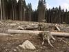 Schierke_e-m10_1019021980 (Torben*) Tags: schierke harz olympusm1442mmf3556iir olympusomdem10 rawtherapee wald forest baumstumpf treestump