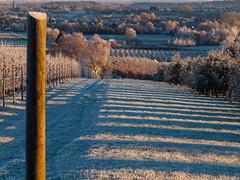 Cold mornimg / Kalter Morgen (PHOTOGRAPHY Toporowski) Tags: landscape ice kalt natur nature cold sonnenaufgang landschaft eis winter sunrise eschweiler nrwnordrheinwestfalen deutschland deu