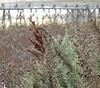 XXXXX (claire costigan hintze) Tags: corcoranlagoon weeds reeds webs bokeh