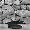(analogicmoment) Tags: 120film 6x6 mediumformat formatomedio blackandwhite bw bnwfilm fujifilm neopan across100 homedeveloped hc110b hasselblad500cm planar80t shootingfilm filmphotography filmisbetter buyfilmnotmegapixels keepfilmalive longexposure nature