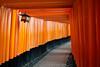 Sanctuaire shinto de Fuschimi Inari #3 [ Kyoto ~ Japon ] (emvri85) Tags: d850 japan kyoto kyōto 京都市 kyōtoshi shinto torii fuschimiinari japonais japanese pluie rain parapluie 35mm japon umbrella rouge 伏見稲荷大社