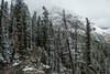 Mountain Trail in Grand Teton National park after a fresh snowfall. . . https://www.arthurgphotography.smugmug.com (arthuroleary) Tags: mountains trail wyoming grandtetonnationalpark hiking hike snow thewest nationalpark lumixfz1000 fz1000 panasonic panasoniclumix