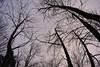 Dendrites (i.enneh3) Tags: trees branches sky dusk winter contrast dendrites nature gloomy dark