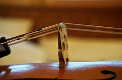 High-strung (lindakowen) Tags: shallowdepthoffield macro bridge strings violin