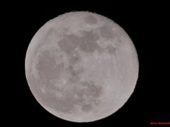 Supermoon 2018 (Anton Shomali - Thank you for over 1 million views) Tags: newyear january planet bright star round full sky fullwolfmoon wolfmoon super moon supermoon night 2018 dark nyl nature light