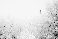 Le héron / The heron (pascal.echevest) Tags: nikon5300 nature natura natur naturaleza natureza composition wild wildlife france iledefrance seineetmarne moissycramayel espacenatureldelamotte héroncendré héron heron greyheron ardeacinerea neige snow hiver winter