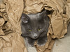 The paper shredder (2013) -[ Happy Caturday ]- (Carbon Arc) Tags: happycaturday cat feline furball pose fluffball kraft paper hide tear shred ownerschoice