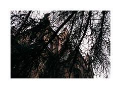 6. View through the branches. (kotmariusz) Tags: branches hide analog 35mm filmphotography analogowafotografia gałęzie budynek schowany polska poland fuji olympusom40 mokrzeszów mokrzeszow
