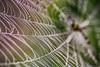 Spider Net (shah_jaman) Tags: spider spidernest insect outdoor naturephotography nightlight dewdrops nature naturecolor narurephoto nice beautifulbangladesh beautyofnature jamansphotography