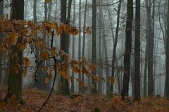 DSC_2526 In den Zweigen hängen geblieben - Stuck in the branches (baerli08ww) Tags: deutschland germany rheinlandpfalz rhinelandpalatinate westerwald westerforest wald forest winter schnee snow nebel mist