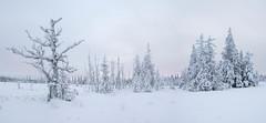 Frosty realm (Fjällkantsbon) Tags: lappland sverige lapland midvinter myr december blaikfjälletsnaturreservat panorama evamårtensson stutvattenmyren västerbottenslän se