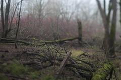 Oaks Bottom (Tony Pulokas) Tags: blur tree oaksbottom portland oregon oaksbottomwildlifepreserve tilt bokeh autumn fall ash oregonash fraxinus dogwood redosierdogwood cornus moss