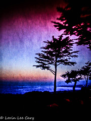 Cambria Pines Sunset (lorinleecary) Tags: california cambria trees artography coast composite pines sunset textured