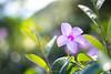 Guadeloupe Flower (eschborn.photography) Tags: eschborn eschbornphotography island bokeh soft bug insect karibik caribbean french antilles antillen kleine leeward terre de haut 2017 vacation
