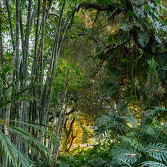 lndscp-huntington-gardens-2017-1343.jpg (samuel ludwig) Tags: california losangelescounty sanmarino thehuntingtonlibraryartcollectionsandbotanicalgardens pasadena