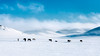 snow (Mr.NG (NG先生)) Tags: landscape snow inter mongolia animal simple 簡 白 風景 動物 極簡 air steam smoke
