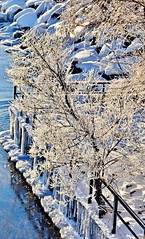 Humber River, Etobicoke, ON (Snuffy) Tags: winter seasons humberriver lakeontario humberbayshorespark etobicoke toronto ontario canada