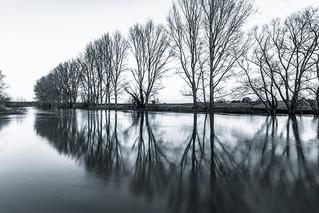 Hochwasser am Niederrhein