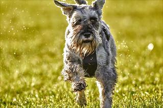 fun run in the sun