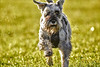 fun run in the sun (Paul Wrights Reserved) Tags: dog pet grass run running sun sunny happy light bokeh
