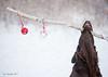 The Joy of Christmas (Blazingstar) Tags: studio 26 flatcoated retriever dog christmas joy snow stick
