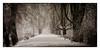 Kastanienallee (efgepe) Tags: 2017 70mm dezember schnee allee kastanienallee snow viveza color colour colorefexpro nik lightroom farbe bäume tree trees