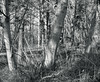 Alders Rhino45monochrome 2 (Nicholas Lyle) Tags: mamiya645 45mm28 shiftstitched rhinocam vizelex fotodiox fujifilmxe2