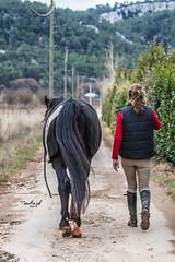 Catherine & Safir (TessAnjel) Tags: cheval horse arabe arabic noir black animal animalier equitation riding entraînement ecurie dressage france reflex canon 700d eos objectif lens 70200mm photography picture photo portrait paca