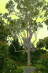 Surreal Gumtree! (maginoz1) Tags: surreal sky landscape gumtree pylons abstract art contemporary bulla melbourne victoria australia summer december 2017 canon g3x