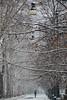 Viale d'inverno - Winter avenue. (sinetempore) Tags: vialedinverno winteravenue neve snow torino turin corsomassimo parcodelvalentino viale street uomo man ombrello umbrella alberi trees rami branches lampioni streetlamp