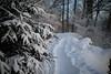 senda d'enviern (Albishorn) (Toni_V) Tags: m2406154 rangefinder digitalrangefinder messsucher leicam leica mp typ240 type240 35lux 35mmf14asphfle summiluxm dof bokeh iso500 wanderung hiking escursione randonnée winter snow schnee albishorn sihlwaldalbishornalbispassuetlibergzurich kantonzürich trail wanderweg wald switzerland schweiz suisse svizzera svizra europe ©toniv 2017 171229