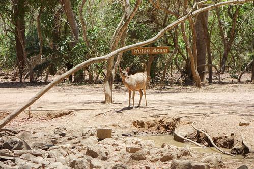 95-Labuan Bajo e Islas de Komodo (78)