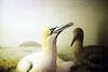 film (La fille renne) Tags: film analog 35mm lafillerenne canonae1program 50mmf18 kodak kodakcolorplus200 travel england museum taxidermy bird