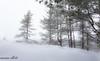 Dreaming In White (maureen.elliott) Tags: winter landscape snow snowy almostmonochrome white ridge nature trees algonquinpark hiking trail snowshoeing