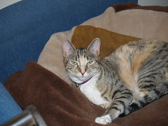 twix (5) (lorablong) Tags: twix cat pet westhollywood california