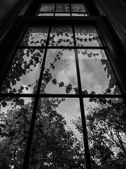 upwards (jojoannabanana) Tags: 3652017 blackandwhite dramatic dreamy melancholy mentalhealth monochrome mood panasoniclumix psychological shadows silhouette trees vines window