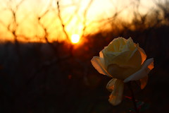 Winter Sunset (viviandemotte) Tags: web spider spiderweb shadow white plant clouds landscape cold relax dreamy colorful sky weather winter rose sunset photography canon eos1300d