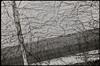 Spillern (Harald Reichmann) Tags: niederösterreich spillern autobahn wand lärmschutz geometrie muster pflanze netzwerk alltagskunst analog film nikonf3 linie