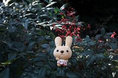 Rabbit and Red Fruit (Eridanus 21) Tags: うさぎと小石川植物園のナンテンの実 rabbit redfruit nandinadomestica うさぎ 小石川植物園 ナンテン ぬい撮り ぬいぐるみrabbit ぬいぐるみ