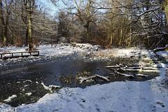 Winter Wonderland #3 (MJ Harbey) Tags: trees snow tree wood landscape forest ice pond nikon d3300 nikond3300 ashridgeestate nationaltrust ringshall hertfordshire