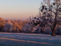 Cold mornimg / Kalter Morgen (PHOTOGRAPHY Toporowski) Tags: kalt licht sonnenaufgang contrast landschaft light cold sunrise landscape winter schnee eschweiler nrwnordrheinwestfalen deutschland deu