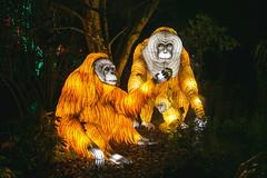 Wild Lights (Strangelove 1981) Tags: 2017 dublinzoo ireland wildlights zoo night lights glow light animals festival orangutan ape orange