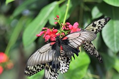 (ONE/MILLION) Tags: vacation travel tours events exhibit butterfly wonderland scottsdale arizona williestark onemillion love nature plants blooms flowers blossoms colorful angels christmas landscape kids education school programs bee bees honey food